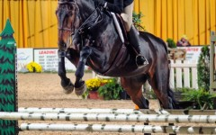 New Equestrian Club Saddles Up for 2016